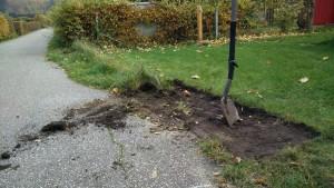 Der arme Rasen... aber die Hecke will ihren Platz (Bild: O.Thiele)